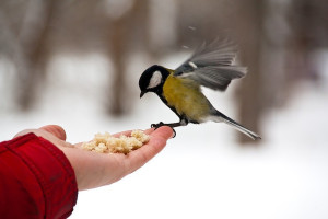 картинка птица